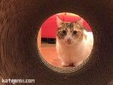 [Review] Hapineko คาเฟ่แมวที่ชิบูย่า, โตเกียว