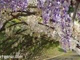 [Review] Fukuoka – Nagasaki ทริปสวนสนุกและสวนธรรมชาติ 6 วัน 5 คืน ตอนที่ 2: Kawachi-fujien – Kokura Castle –Inasayama