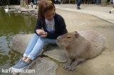 [Review] Nagasaki Bio Park สวนสัตว์ สวนสนุกแห่งนางาซากิ