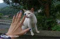 ตัวนี้เขรอะมาก ได้รับขนมแมวไป 1 ea
